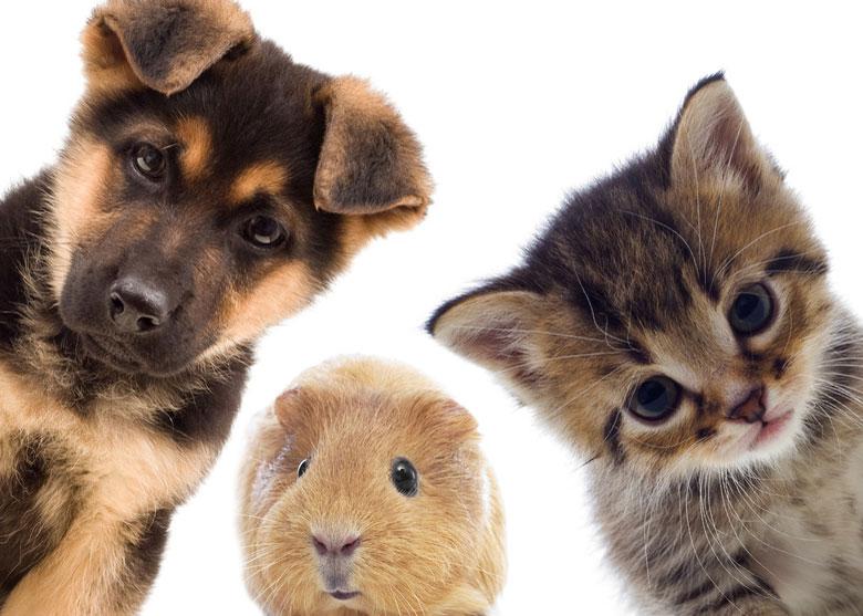 ペット供養