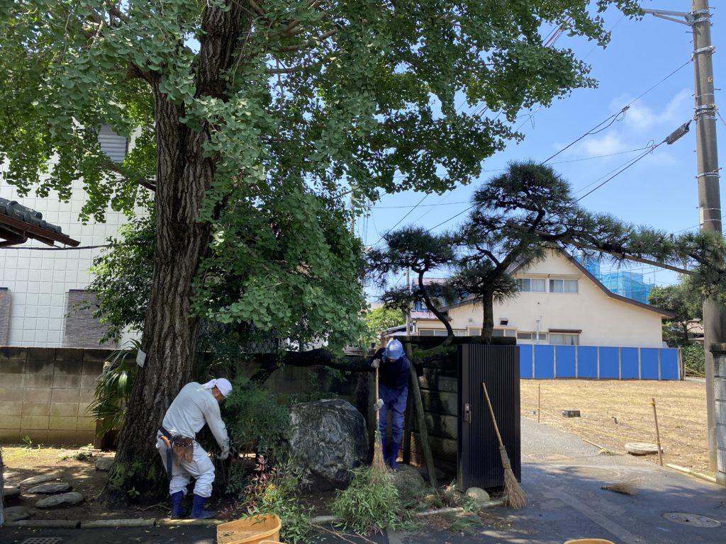 海徳寺植木の選定